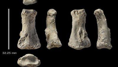 کشف یک فسیل استخوان با قدمت ۸۸۰۰۰ سال در عربستان