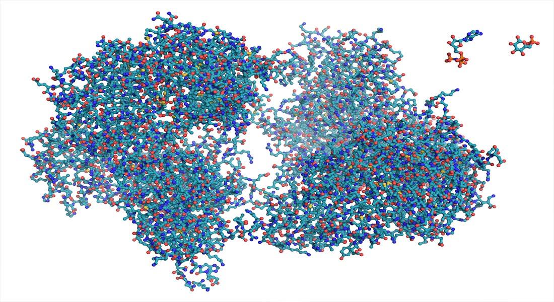 کامپیوتر کوانتومی مولکول آنزیم
