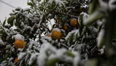 سرمازدگی بیش از 80 درصد باغات «سلطانیه»