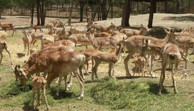 تعطیلی یک مرکز نگهداری از حیات وحش در تهران