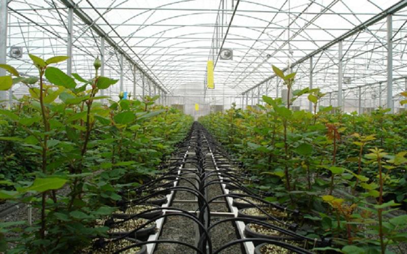 افزایش ۷۰ تنی عملکرد تولیدات گلخانهای