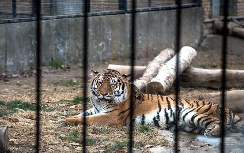 ما هیچ حیوانی را از طبیعت به باغ وحش نمیآوریم