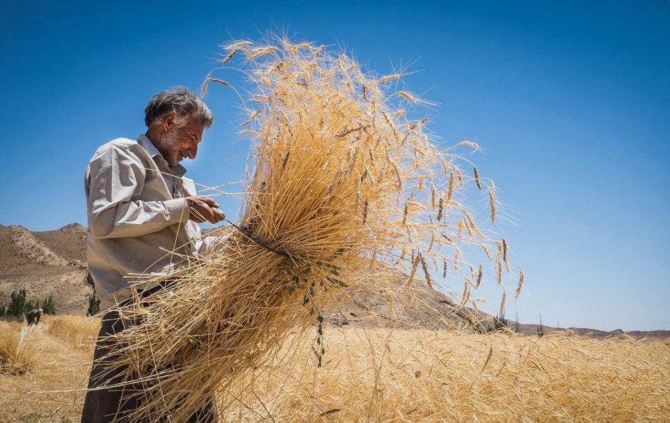 مقدمات عرضه گندم در بورس کالا ظرف دوماه آینده فراهم میشود