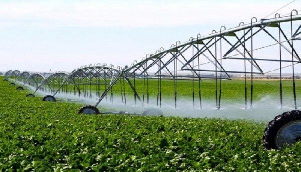 شالیکاران مصرف آب کشاورزی را مدیریت کنند