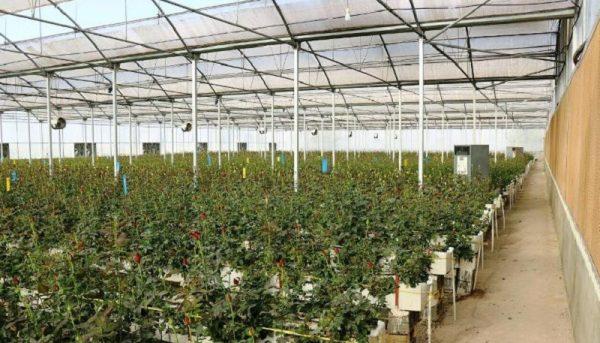 ۳۷۰۰ هکتار از سطح گلخانههای سنتی و چوبی نیاز به اصلاح دارند