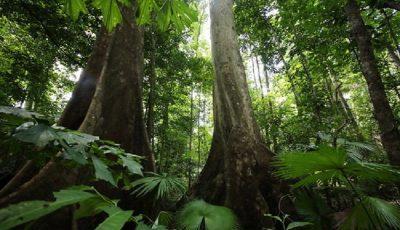 تاکید کارشناسان بر حفظ جنگلهای بکر