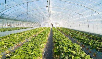 افزایش صادرات محصولات کشاورزی با کشت گلخانهای امکانپذیر است