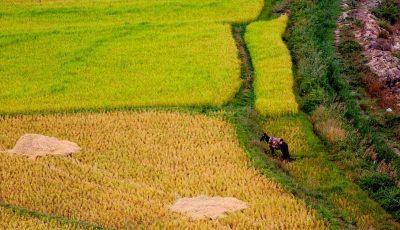 مصوبه خرید تضمینی محصولات کشاورزی اصلاح شد
