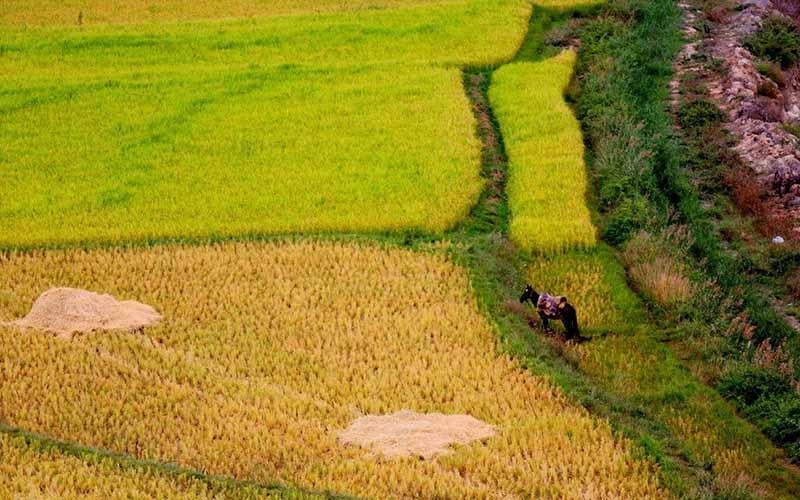 پنج طرح راکد کشاورزی در پارسآباد احیا میشود
