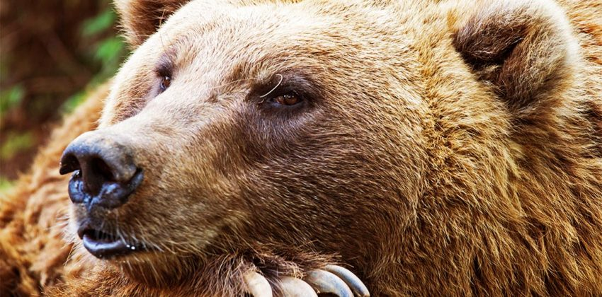 تفکر اقتصادی اقتصاددان خرس متفکر