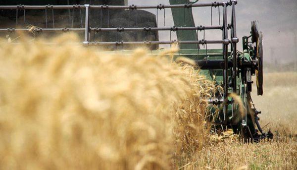 گرانی ارز تولید و صادرات محصولات کشاورزی را به صرفه کرد