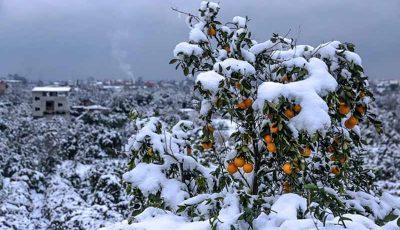 کشاورزان خسارت دیده آذربایجان شرقی تسهیلات گرفتند