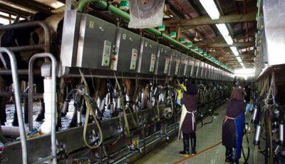 پیشبینی تولید ۱۱ میلیون تن شیر خام در سال جاری