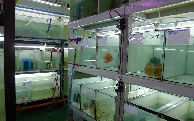 ارزآوری ۸۰۰ هزار دلاری صادرات ماهیان زینتی