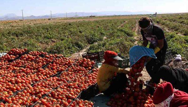 ۲.۵ میلیون تن به ظرفیت تولید محصولات کشاورزی اضافه میشود