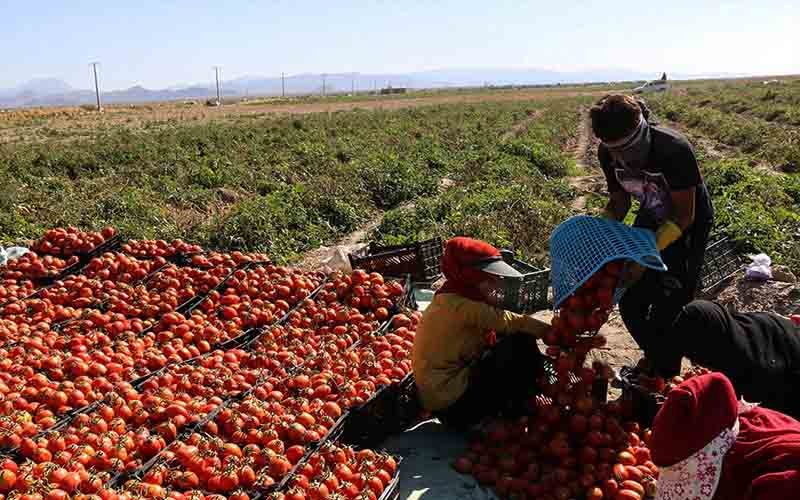 وضع عوارض بر صادرات محصولات کشاورزی