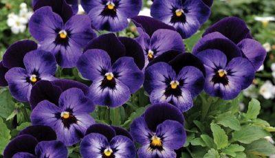تولید گلی که تولید کنندهاش را وابسته میکند
