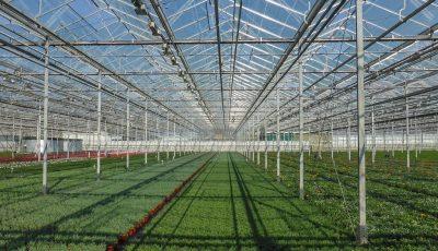 رشد ۷ درصدی صادرات کشاورزی هلند با برنامهریزی وزارت کشاورزی