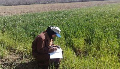 استفاده از ظرفیتهای فارغالتحصیلان بیکار کشاورزی