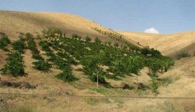 مشکلات زراعت آبی با تمرکز بر کشت دیم جبران میشود