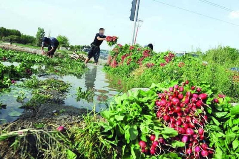 زراعت و باغداری چقدر گران شده است؟