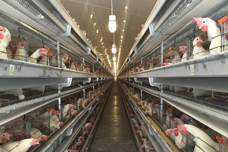 تولید محصولات مرغداری در کدام استان ارزانتر است؟