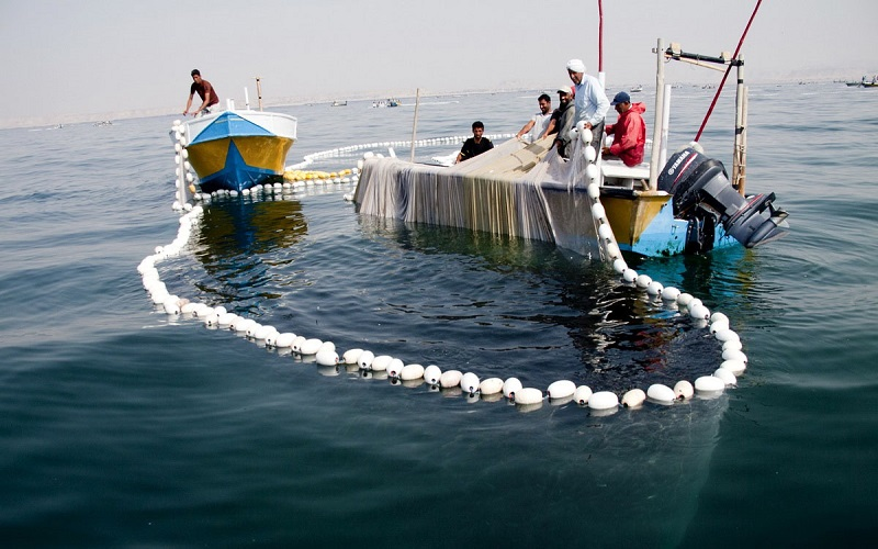 صید برخی از آبزیان در آبهای هرمزگان ممنوع شد - تجارتنیوز
