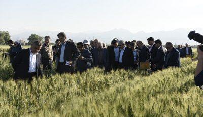 تولید بیش از ۵۰ رقم بذر به بخش خصوصی واگذار شد