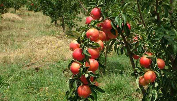 تولیدات باغی در سال ۹۶ افزایش یافت