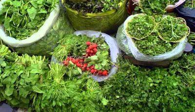پیشبینی میزان تولید سبزی و صیفی در سال زراعی جاری