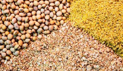 نگرانیهای بازار جهانی خوراک دام و طیور
