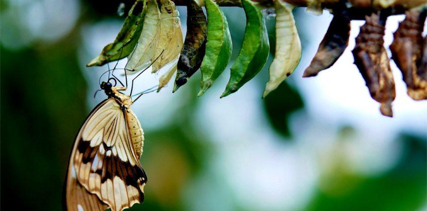 استقلال مالی تربیت فرزند پروانه پیله