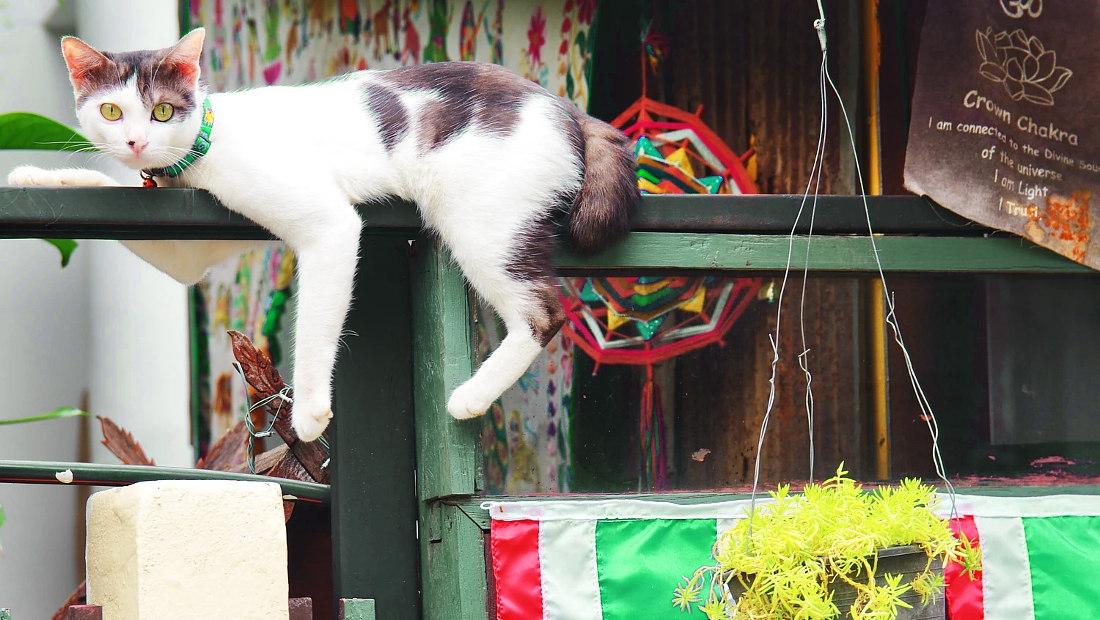جانبداری نجاتیافتگان گربه روی نرده بالکن