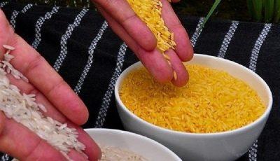 سازمان غذا و داروی آمریکا برنج طلایی را تایید کرد