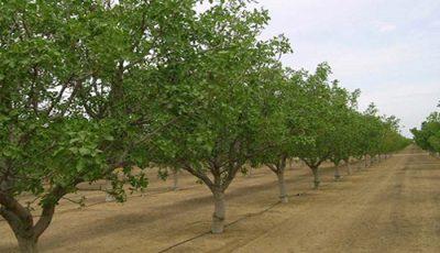 وجود ۱.۷ میلیون بهرهبردار باغداری در کشور
