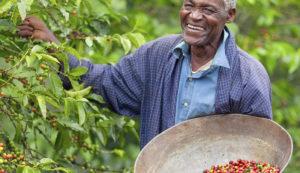 اتحادیه آفریقا تجارت قهوه