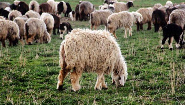 مراتع ایران به قطریها اجاره داده شده است؟