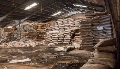 ورود سازمان بازرسی به مزایده سه هزار تن چای سنواتی