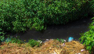 آبیاری باغات سبزی با آب ناسالم + عکس