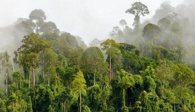 پیامدهای سوء تخریب جنگلهای گرمسیری برای زمینیها