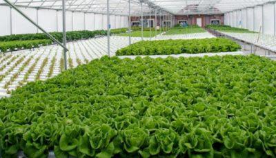 صادرات ۲۲ میلیون دلاری گل و گیاه در سال ۹۶