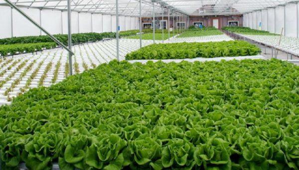 بهرهبرداری از فاز اول بزرگترین مجتمع گلخانهای ایران در چابهار