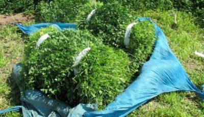 سبزیجات صدرنشین فهرست دورریزها