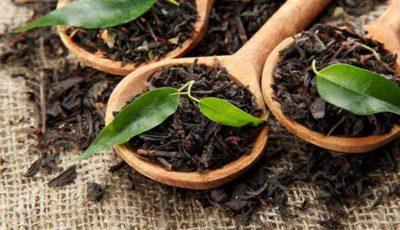 رشد 11 درصدی تولید چای خشک در سال جاری