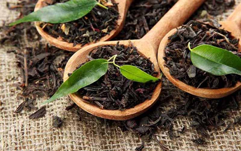 تولید ۲۲ هزار تن چای خشک در سال جاری
