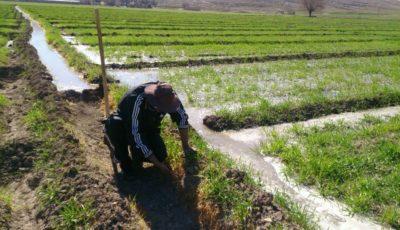 بحران جدید در خوزستان؛ این بار کمبود کود اوره