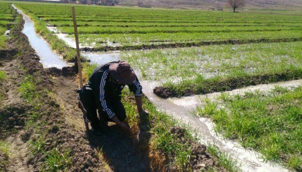 آینده کشاورزی در ایران چه خواهد شد؟