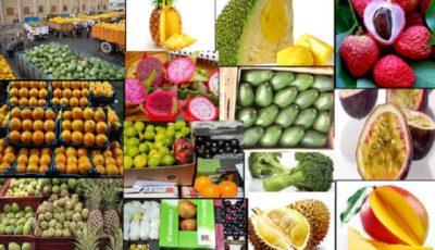 گرانی ۸۳ درصدی میوه تقصیر دلالان است