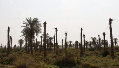 کشاورزی خرمشهر ۱۴۶ میلیارد ریال خسارت دید