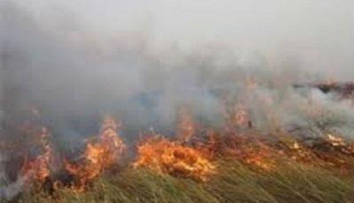 پایش ماهوارهای آتشسوزی تالاب هورالعظیم بهصورت روزانه